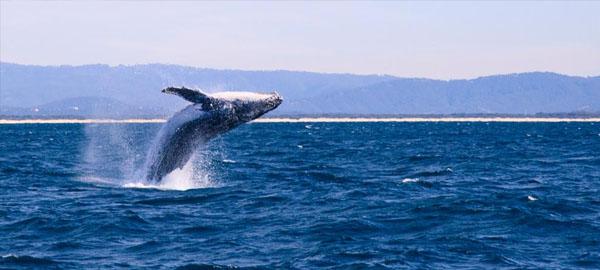la-petrolera-bp-renuncia-a-perforar-el-santuario-de-ballenas-en-la-gran-bahia-australiana
