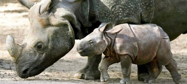Más de 180 países acuerdan tomar fuertes medidas para proteger la fauna salvaje