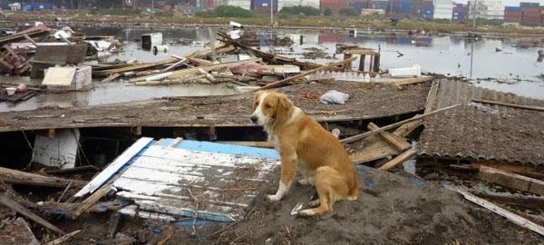 La ONU destaca la necesidad de la protección de los animales en desastres naturales