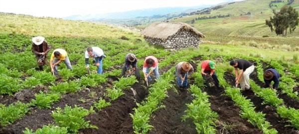 La agricultura juega un papel fundamental en la reducción de las emisiones de gases de efecto invernadero