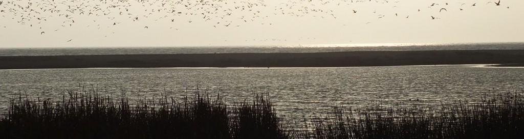 Las praderas marinas y los humedales costeros son claves en la lucha contra el cambio climático