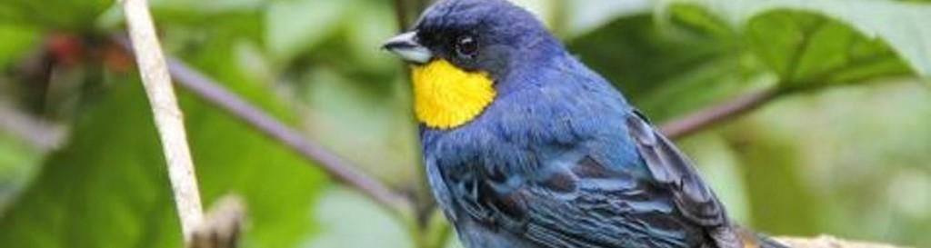 Más de 200 tipos de aves deberían entrar en la Lista Roja de especies en peligro de extinción