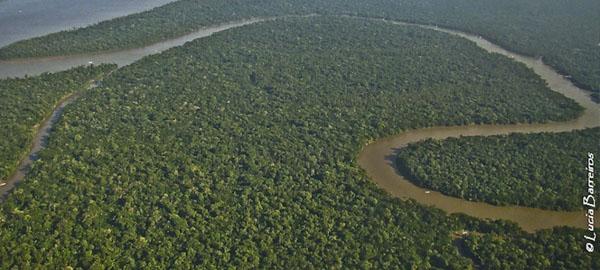 Buscan controlar la deforestación en la selva del Amazonas con sensores inalámbricos