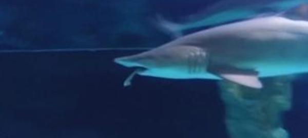 C%c3%b3mo-afecta-la-caza-de-tiburones-al-cambio-clim%c3%a1tico
