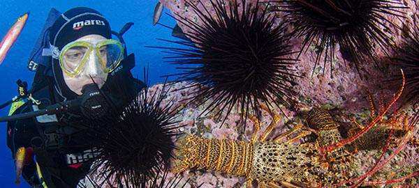 Fortalecen protección de parques y reservas marinas en Chile