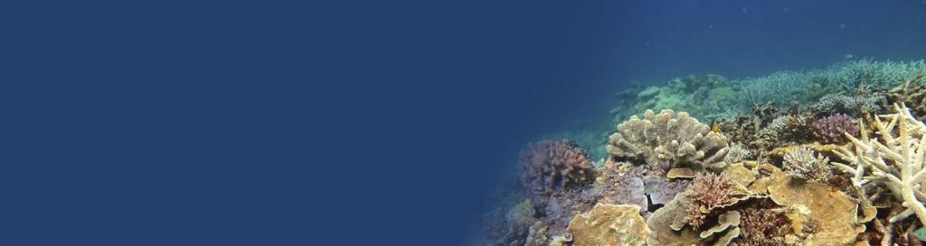 La Gran Barrera australiana, en riesgo de ser declarada patrimonio en peligro