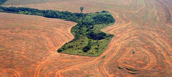 La deforestación de la Amazonía brasileña alcanza su mayor nivel en 8 años