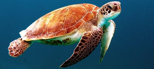Crean un área marina en Chile de 11.000 km2 para la conservación de especies