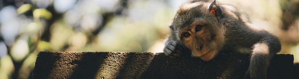 El cambio climático amenaza a casi 700 especies de mamíferos y aves