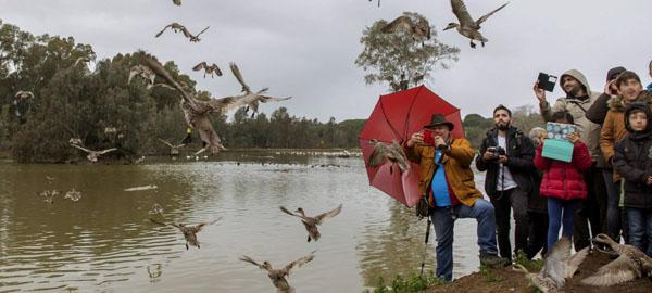 Empiezan las obras de restauración de humedales de Doñana