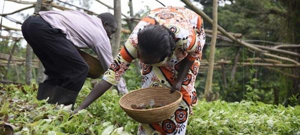 Escuelas de campo ayudan a mujeres contra el cambio climático