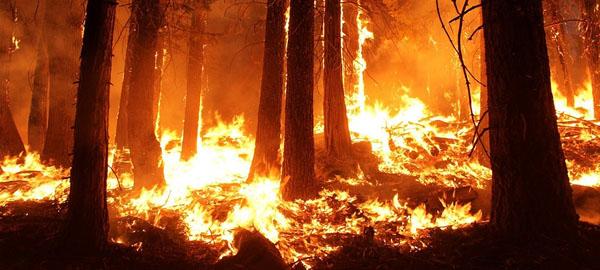 Incendios extremos y virulentos como los de Chile se extenderán a todo el planeta