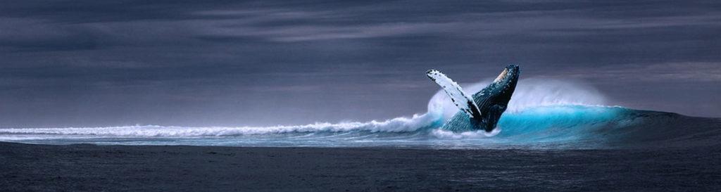 La desaparición del krill en la Antártida por el calentamiento global podría acabar extinguiendo a ballenas y pingüinos