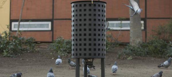 SEO/BirdLife critica el pienso anticonceptivo para palomas utilizado en Barcelona