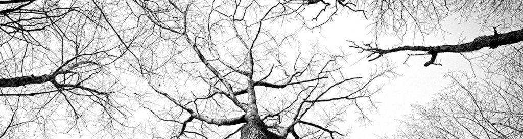 Una sequía generalizada amenaza a todos los bosques