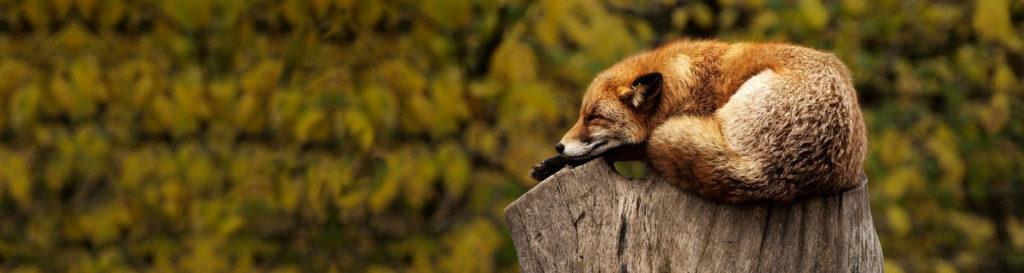 3 de marzo: Día Mundial de la Vida Silvestre