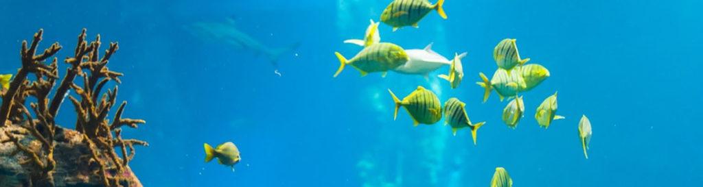 Desde 2050, el Mediterráneo ha perdido un 34% de sus peces