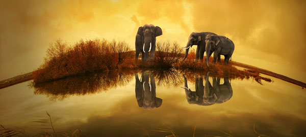 El-calentamiento-global-empieza-a-ser-catastr%c3%b3fico-para-las-especies
