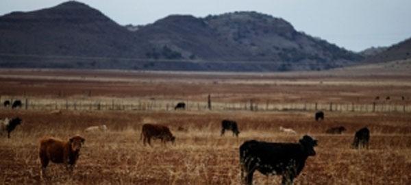 El cambio climático podría provocar migraciones de EEUU a México