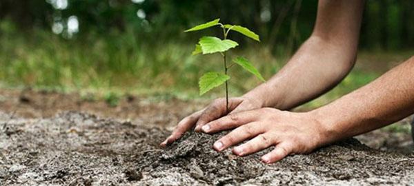 Gran Bretaña plantará 11 millones de árboles para frenar la deforestación