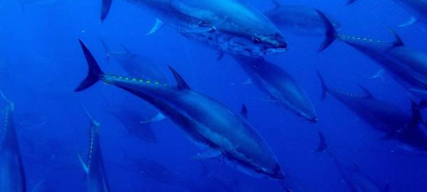La creación de áreas marinas protegidas vuelve a los peces más precavidos