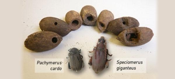La pérdida de depredadores reduce la diversidad de sus presas