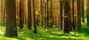 Biomasa y gestión forestal sostenible como alternativas a la deforestación global
