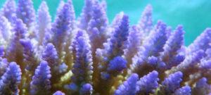 El aumento del nivel del mar afecta a los arrecifes de coral