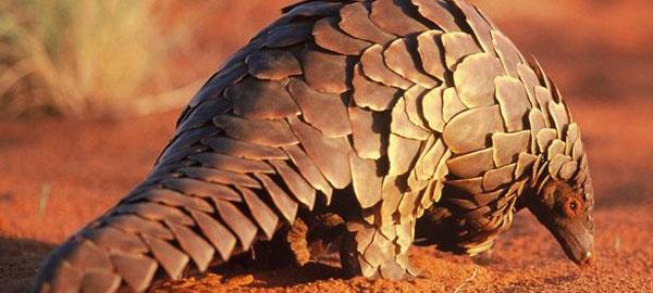 El tráfico ilegal de especies se registra en un 30% de los lugares protegidos