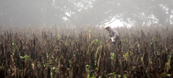 Guatemala se prepara para enfrentar fenómeno de El Niño en 2017