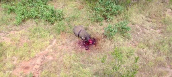 Los drones fracasan en la mayor reserva de rinocerontes del mundo