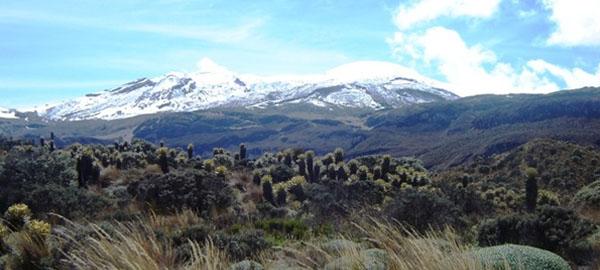 Los glaciares colombianos desaparecen y la biodiversidad asociada peligra