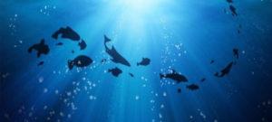 Científicos lusos lanzan un sistema pionero para monitorizar los océanos