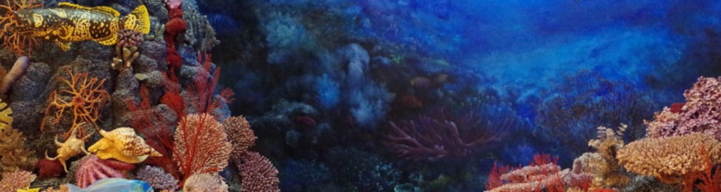 El 13% de los corales y gorgonias del Mediterráneo, amenazados de extinción