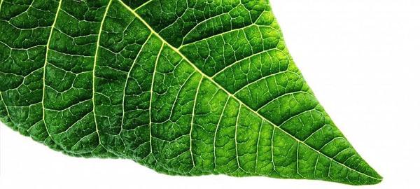 Inventan una fotosíntesis artificial que elimina CO2 y crea energía solar