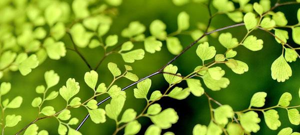 Las matemáticas ayudan a comprender la adaptación de las plantas al cambio climático