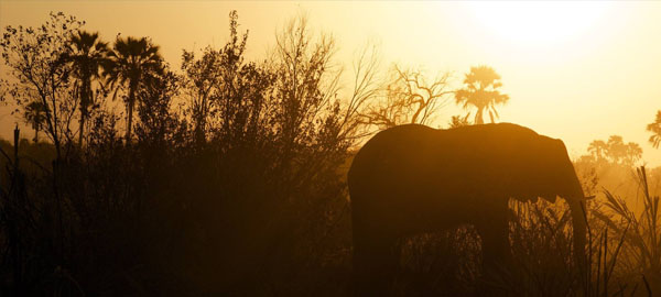 El planeta está perdiendo su biodiversidad más rápido de lo que se esperaba