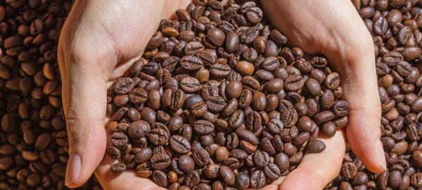 La mitad de los cultivos de café etíope se perderán este siglo por el cambio climático