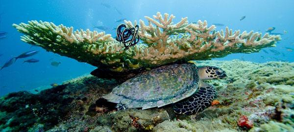 Los corales ayudan en la predicción de erupciones volcánicas submarinas