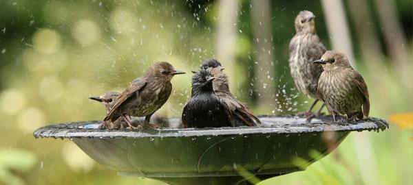 Piden poner agua en el balcón para que los pájaros puedan soportar la ola de calor