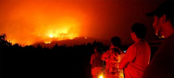 Una campaña para reforestar regiones afectadas por los incendios forestales