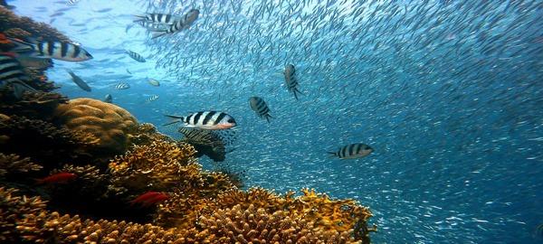 Nuevo estudio alerta sobre la posible desaparición de los arrecifes de coral