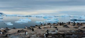 La Antártida cambia su biodiversidad