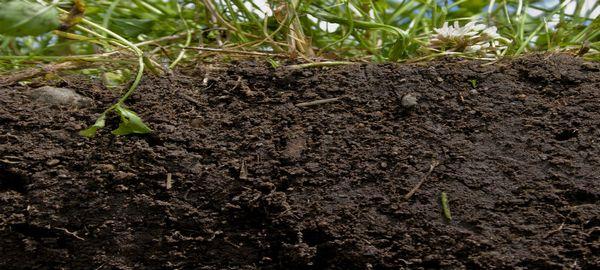 Coordinación para afrontar la contaminación de suelos