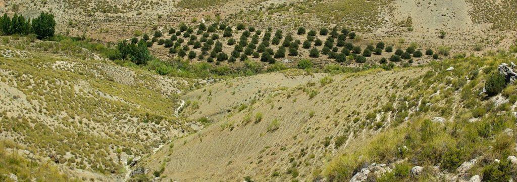 Los planes de sequía, a examen en España