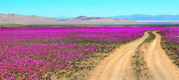 ¿Puede un desierto tener flores?