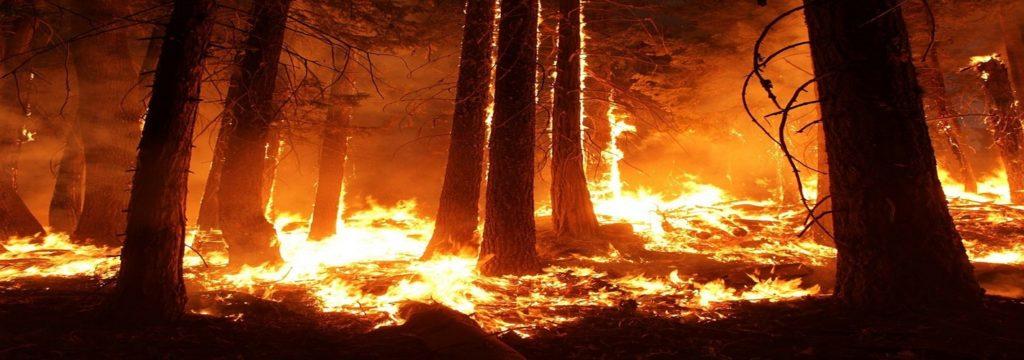 Registrados el doble de incendios que el año anterior