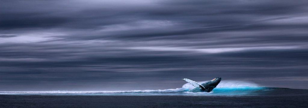 Los científicos impulsan el rescate de los océanos