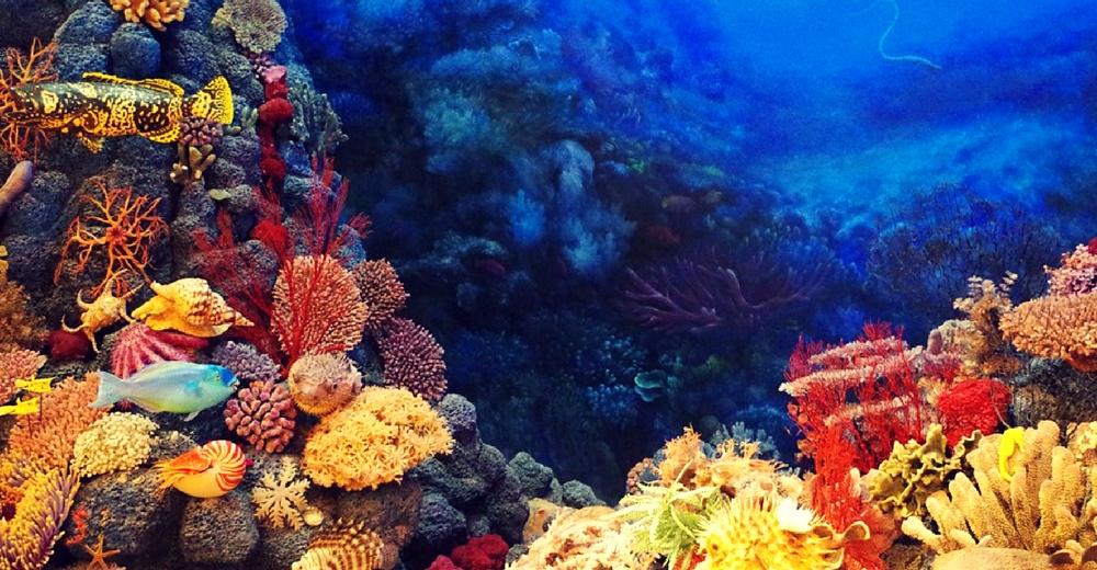 El plástico podría ser un estimulante para los corales