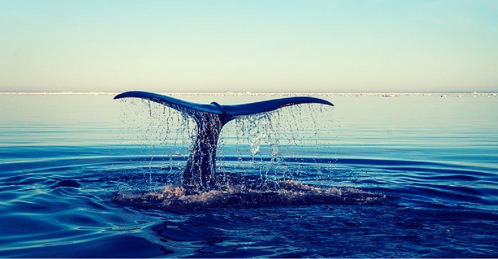 Las cadenas alimentarias del ecosistema marino afectadas por los cambios en el océano